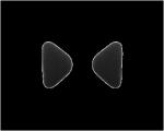 Olympus Tartalék szivacs (5 pár) E-62-höz